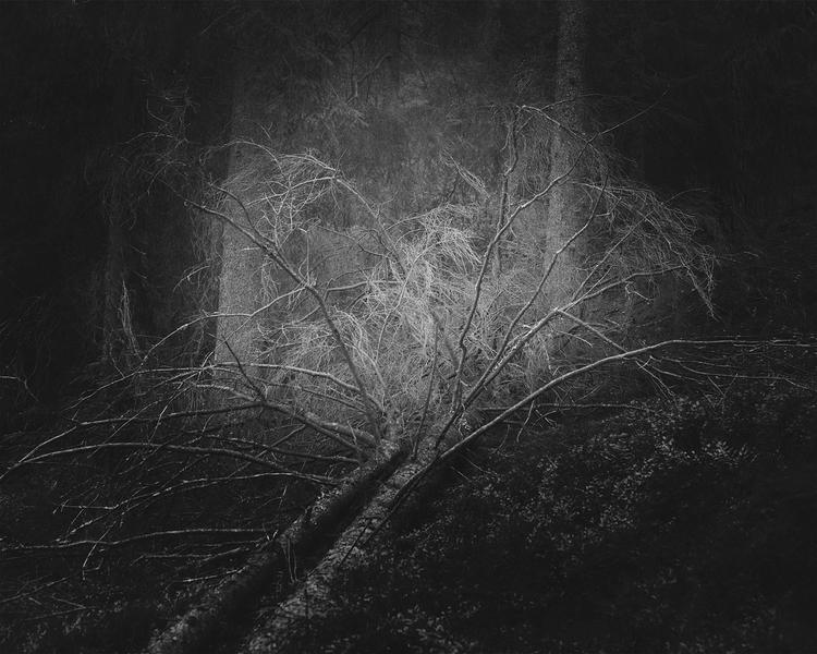 'Cruel Nature 5', 2015, ett konstverk av Kristoffer Axén