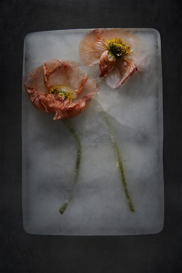'Frozen Poppy', 2018, ett konstverk av Lina Arvidsson