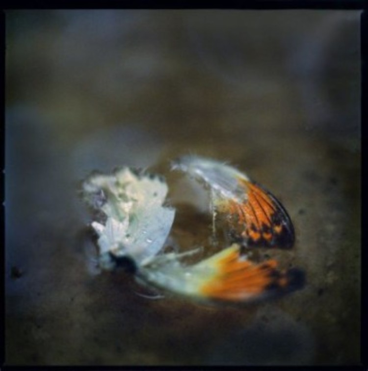 'Untitled', ett konstverk av Anna Clarén