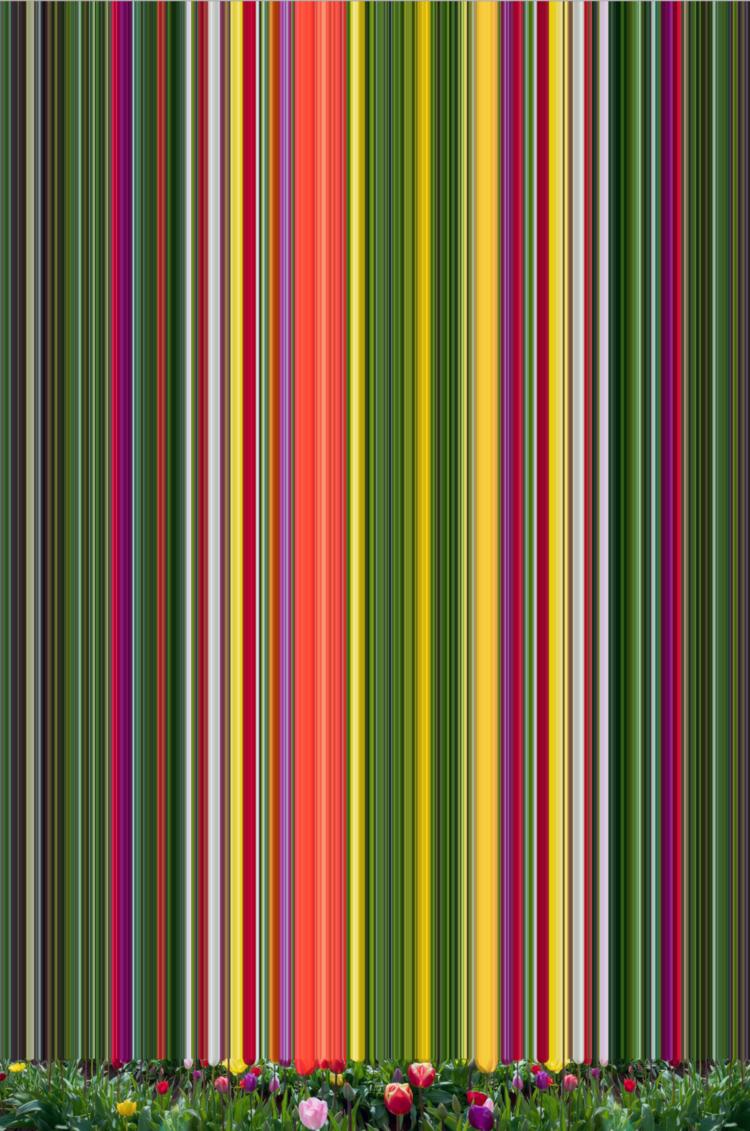 'Tulip Variations ', 2017, ett konstverk av Erik Berglin