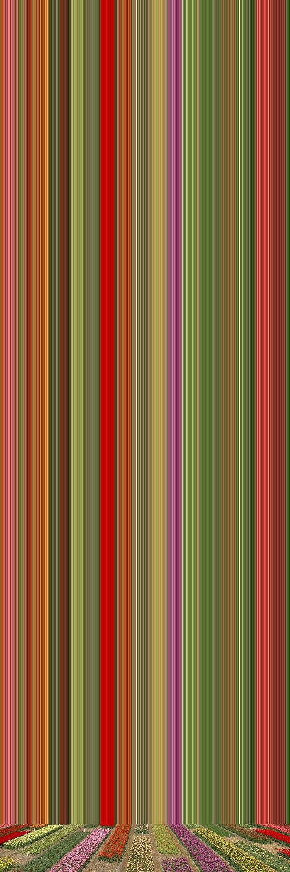 'Tulip Variations #38', 2019, ett konstverk av Erik Berglin