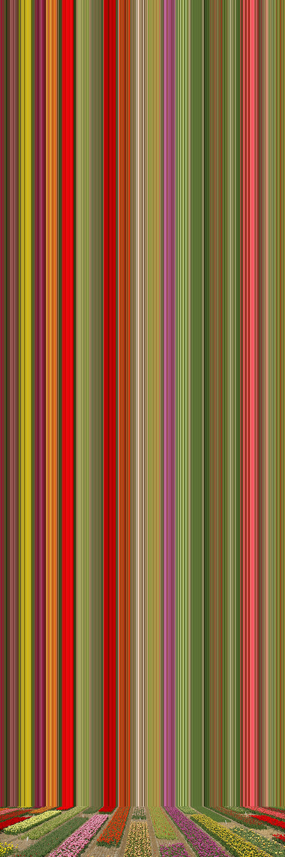 'Tulip Variations #40', 2019, ett konstverk av Erik Berglin