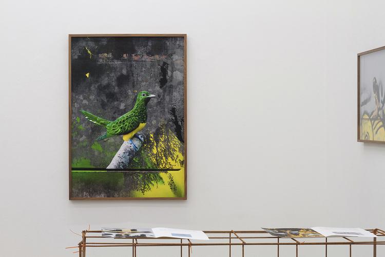 'Chrysococcyx Cupreus, Hornsgatan, Stockholm', 2020, ett konstverk av Erik Berglin