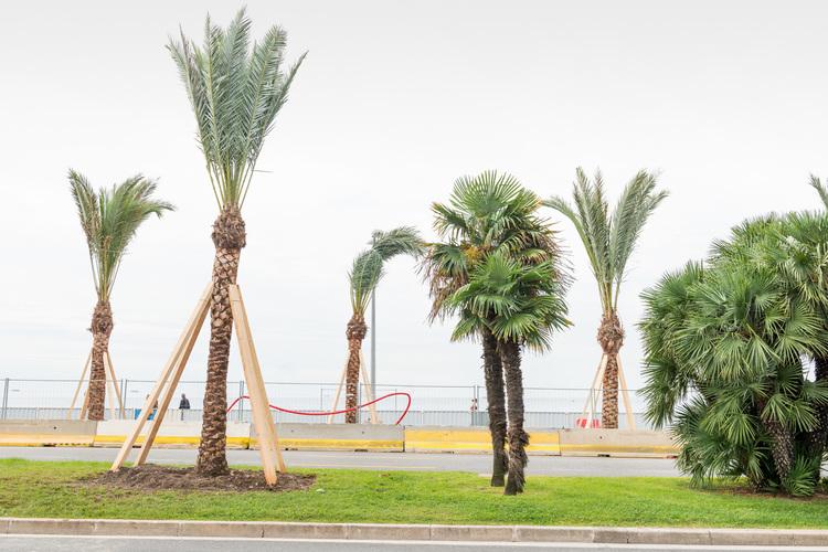 'Building palmtrees', 2018, ett konstverk av Joakim Blomquist