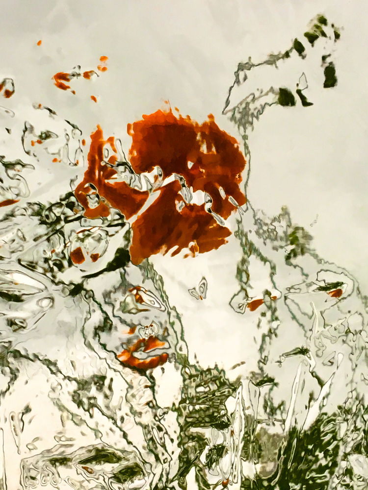 'Poppy', 2018, ett konstverk av Robert Ekegren
