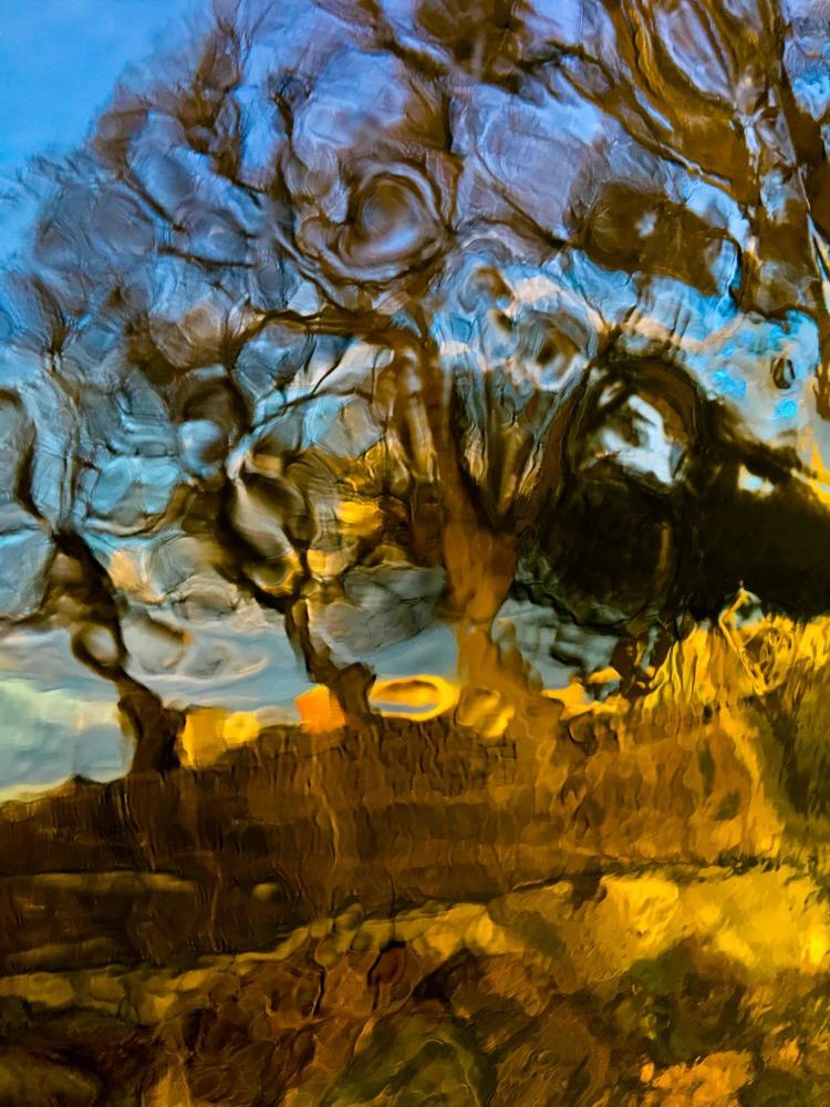 'Trees - The power of roots', 2019, ett konstverk av Robert Ekegren